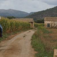 Reiten im Norden von Alcudia Mallorca 01