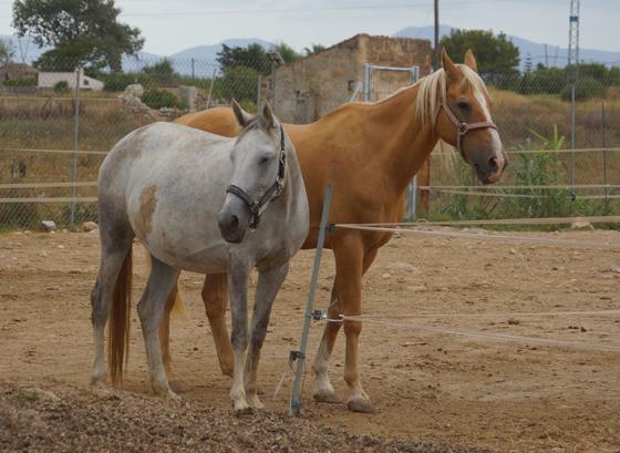 Reiten im Norden von Alcudia Mallorca 09