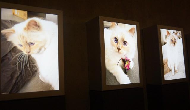 Corsa, Karl Lagerfeld & Choupette Ausstellung in Berlin 11