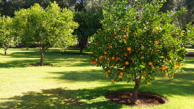La Mamounia Spa Garten Marrakesch Marokko 12