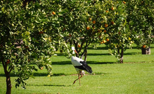 La Mamounia Spa Garten Marrakesch Marokko 15