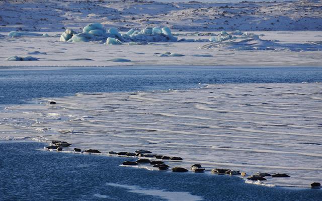 Island Gletscherlagune Jökulsárlón 01