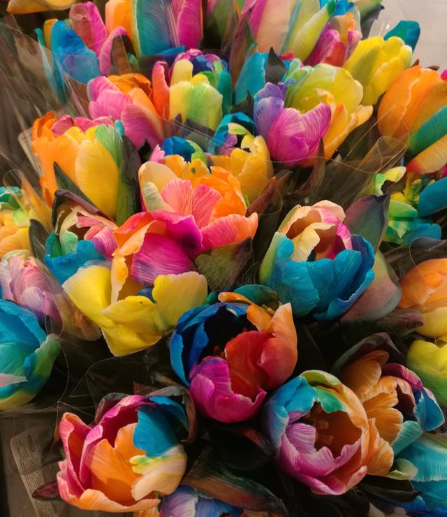 Bunte Tulpen Frühling