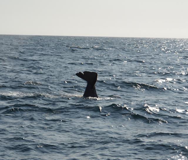 Andenes Whalesafari 03