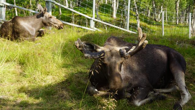 Polar Park Norwegen 07