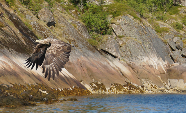 Trollfjord Norwegen 01